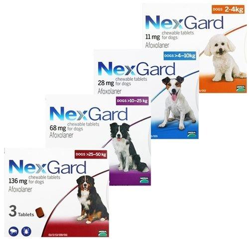 Chó mèo bị viêm da khu vực kẽ chân nên sử dụng thuốc nexgard để trị nội ngoại ký sinh trùng trong cơ thể