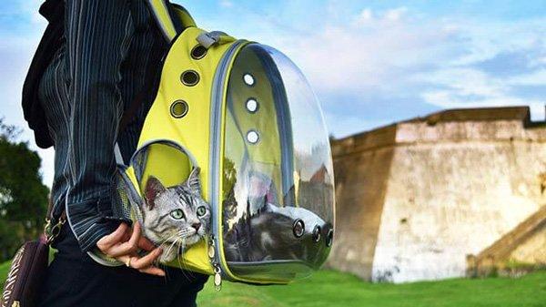 Dùng balo để đựng chó mèo đi trên đường có an toàn không?